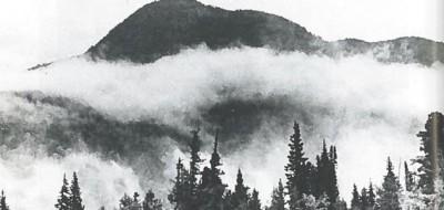 The Siberian taiga. Image: Wikimedia Commons