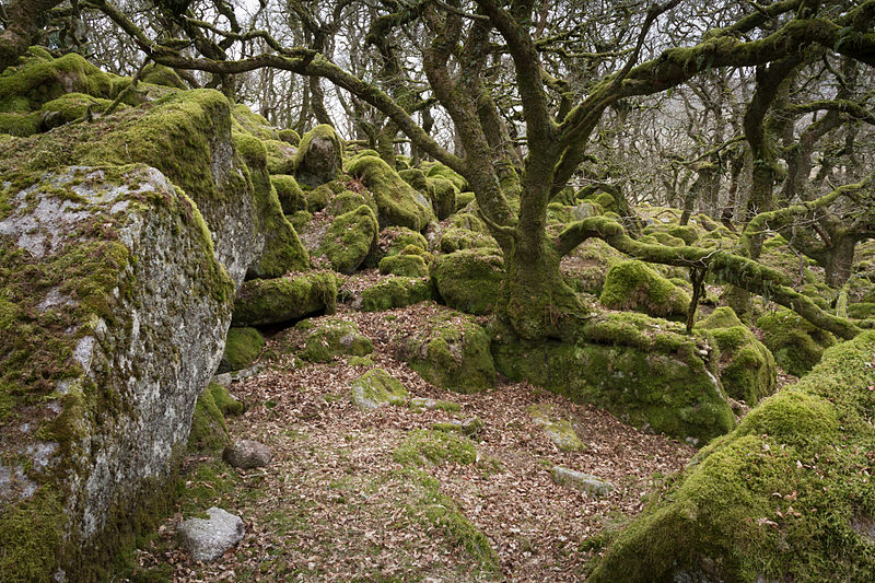 Black-a-Tor Copse - Dartmoor - South Devon, England by Flickr user Miles Wolstenholme  (CC BY 2.0)