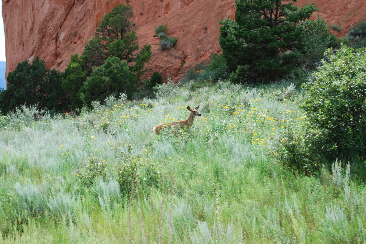 We even saw a deer. My fast fingers were able to capture a photo. Photo: Jenny Bristol